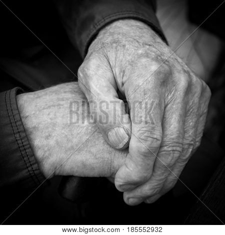 Wrinkled hands of an old man. A long fingernail on the finger. Black and white square photo. Close-up.
