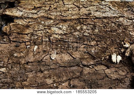Texture of the wrong side of the old tree bark. Brown wooden background. Horizontal rectangular photo. Close-up.