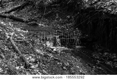 Gloomy landscape. Shallow stream in the thicket of the forest. The trunks of fallen trees and leaves lying on the ground. Black and white rectangular photo.