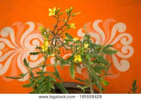 Mini Flower Pot Decorated On The Table stock photo