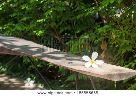 White Flower On Wooden Bench stock photo