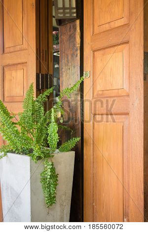Exterior Wooden Door And Plant Pot stock photo