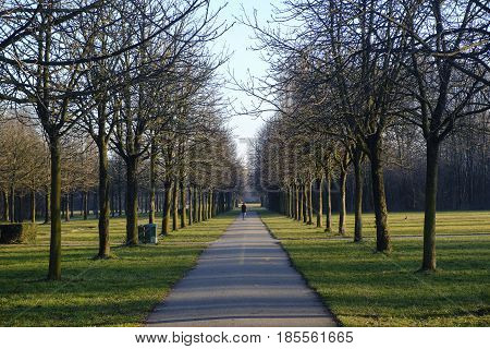 Milan (Lombardy italy): a path in the Parco Nord at winter poster