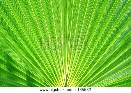 Exotic Plam Leaf