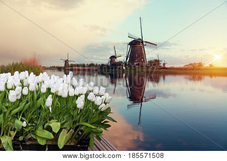 Landscape of Netherlands bouquet of tulips and windmills in the Netherlands