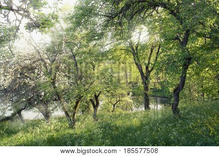 spring nature with ray of light in Nebrodi Park, Sicily