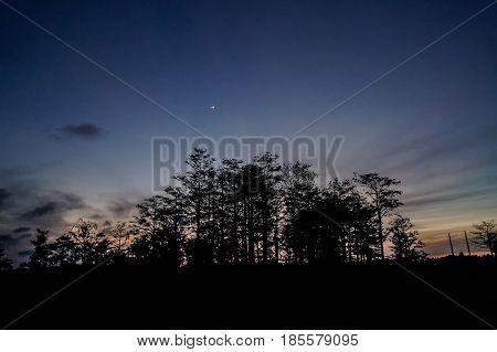 Moon Over Cypress Swamp