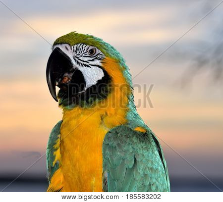 Multi Colored Macaw parrot profile background image