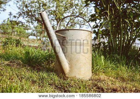 Old aluminum watering can in grass in the garden on spring time. Close up of metal watering pot at springtime. Gardening background