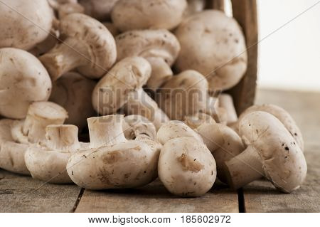 Fresh whole white button mushrooms close up