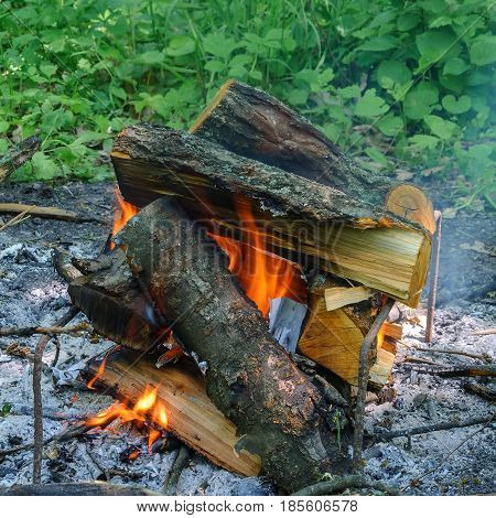 Burning wood for barbecue. The fire in the forest.