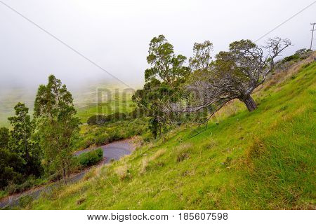 Grassy Landscape Of The Big Island Of Hawaii With Fog In The Background.