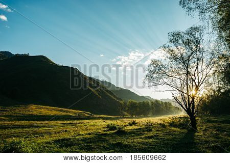 Picturesque morning landscape in the mountains. Through tree branches make their way rays of the sun. Mountain Altai.