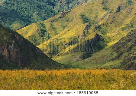 Valley among the overgrown hills. Mountain landscape. Altai.