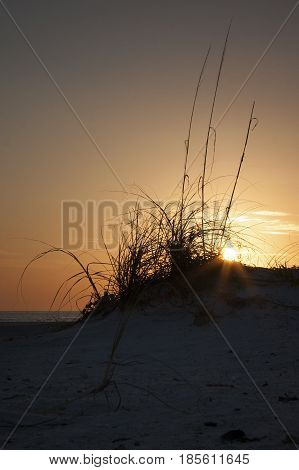 Sun going down at sunset on the west Gulf of Mexico coast of Florida with silhouette of a sea oat on the beach dune