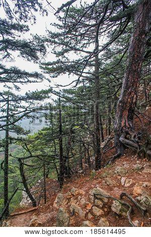 The slopes of Ai-Petri mountain rain pot. Big Yalta Crimea Ukraine. December 2008