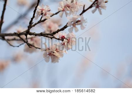 flower on a tree in spring . Photo in nature