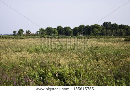 Wide view of long grassy field with a couple of houses set in among the trees in the distance near Cornwall, Ontario on a sunny day in August.