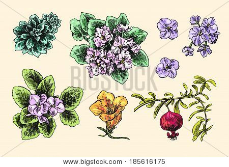Set of hand drawn vector illustrationhouseplants. Us for skrapbuking, tissue, textile, cloth, fabric, web material