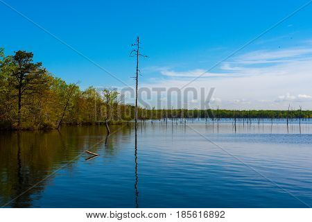 A tall tree with birds on its branches juts out of a blue lake