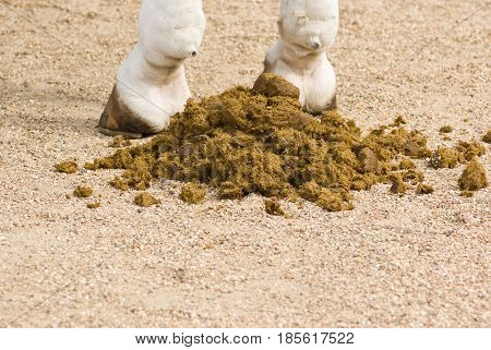 Closeup of horse feces on the sand