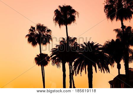 Silhouettes of palm trees on beach at sunset, LA, California