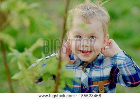 A happy boy of two years is happy and laughs with his hands clasped to his ears - he listens. Portrait, blond, expressive blue eyes. A boy in a spring green garden, ridden with a bush. The child has a checkered shirt