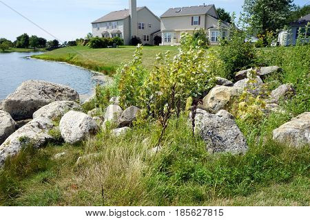 Various plants grow among boulders on the shore of a small lake in a residential area of Joliet, Illinois during August.