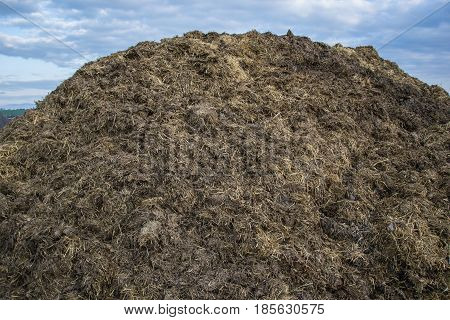 Pile Of Manure In The Countryside With Blue Sky. Heap Of Dung In Field On The Farm Yard With Village