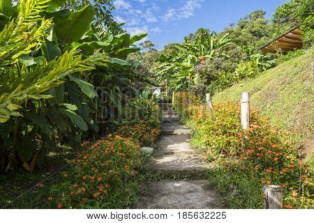 Beautiful Garden Path Leading to a Cabin Surrounded by Lush Tropical Plants and Flowers on a Sunny Day