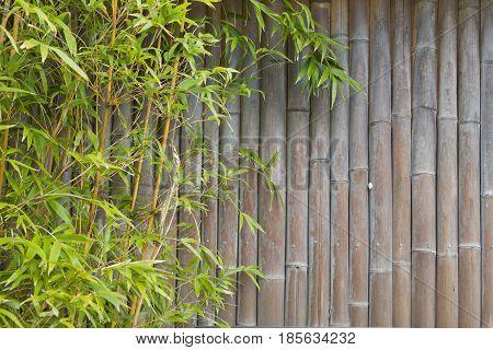 Lush Green Bamboo Screen