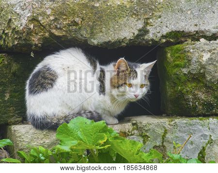 A cunning cat hides among the stones