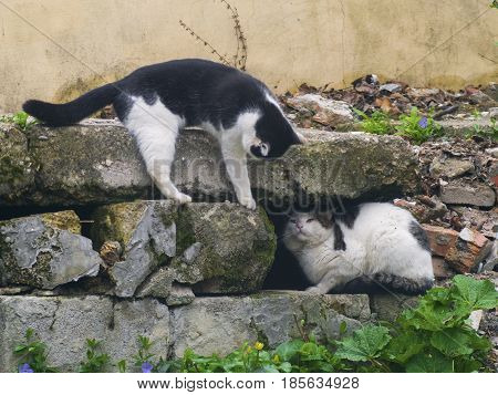 A cunning cats fighting among the stones