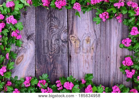 Pink flowering hawthorn branches along the perimeter of the wooden surface empty space in the middle