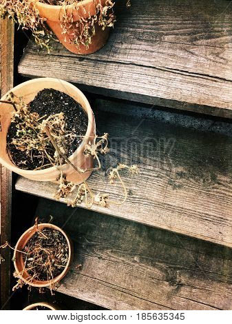Dry wilted plants in clay pots on an old wooden staircase.