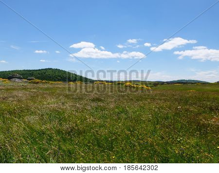 Grassland with brooms and forest at Mont Lozere near Mas de la Barque in the Cevennes mountains France