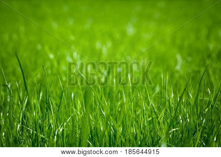 a backgrounds green grass