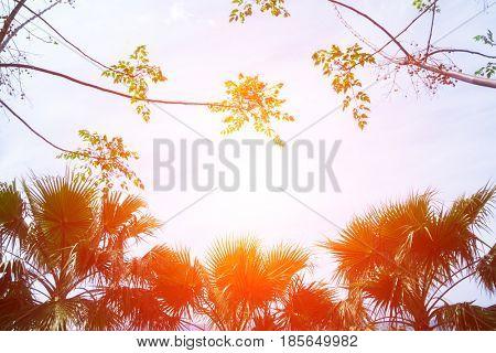 Palm tree silhouettes on orange sundown background. Amazing summer scene on Mediterranean seacost