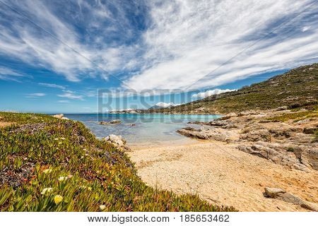 Small Sandy Beach And Flowers On Rocky Coast Of Corsica