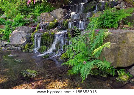 Ferns growing by waterfall at Crystal Springs Rhododendron Garden in Portland Oregon during spring season