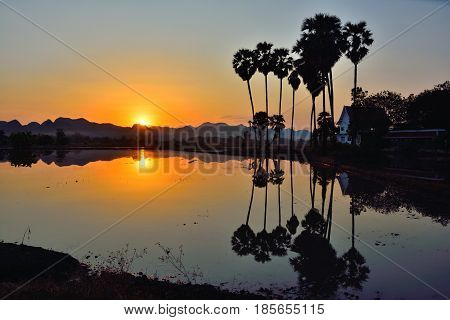 Black silhouette of water reflection tree At sunset.
