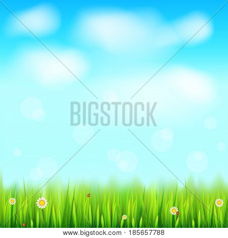 Summer landscape background, green, natural grass border with white daisies, camomile flower and small red ladybug. Blue sky, white clouds in the summer sky. Template for your design or creativity.