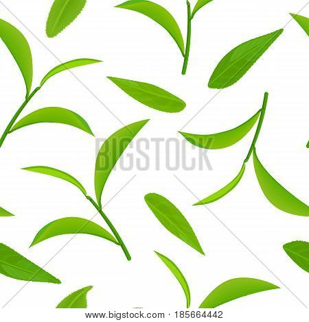 Green tea leaves and twig, seamless pattern vector, isolated on white background. Side view. Close up. For cooking, food design, cosmetics, medicine, health care, ointments, perfumery, tags, wrapping