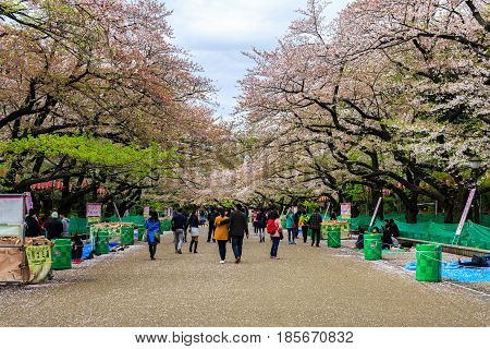 Tokyo Japan - April 8 2016: Ueno Park this area is popular viewpoint of sakura at Tokyo in spring season with cherry blossom.