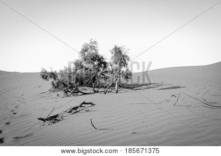 Sand dunes at the coast of Gran Canaria in black and white