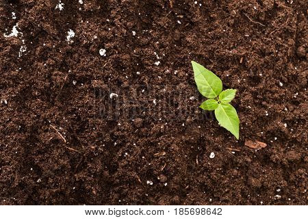 Seedling green plant surface top view textured background
