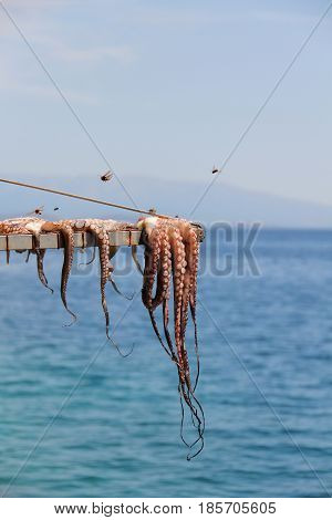 Octopus drying at the sun  in Chios Island.