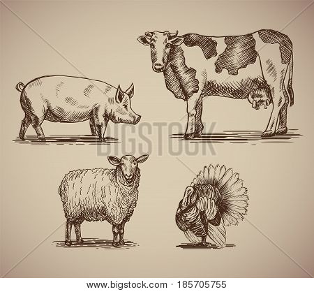 Farm animals in sketch style compilation. Vector illustration livestock drawn by hand. Cow sheep pig and turkey on gray background.