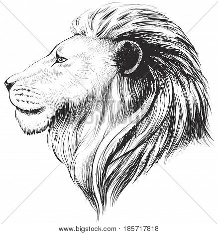 Isolated lions head stylized line. Linear art vector illustration. Lion's profile. Stylized face of lion isolated on white background.