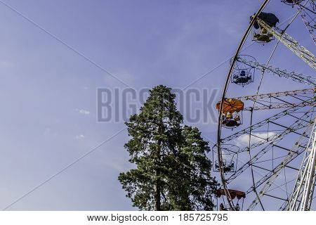 Bright Ferris wheel on a background of old tall pine trees and clear sky.